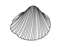 Muschel malvorlage  Ausmalbilder Fische Krebse Seepferdchen Kraken Quallen Muscheln