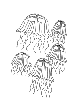 Malvorlage Qualle Tiere Im Wasser Kostenlose Ausmalbilder
